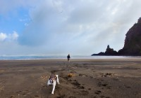Pet-Photography-Piha3